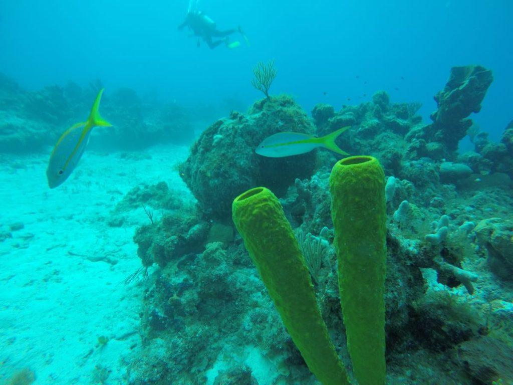 Best Dive Cuba