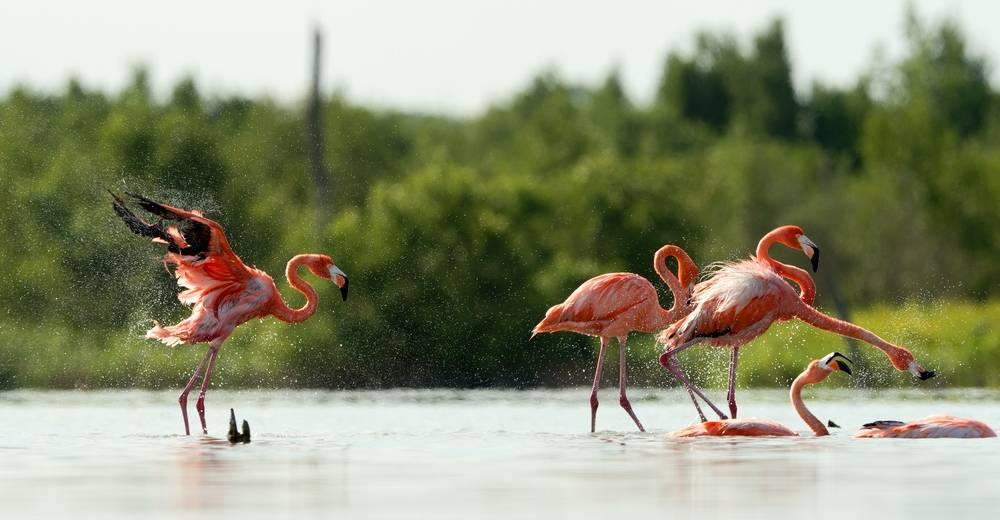 places to go birdwatching in Cuba