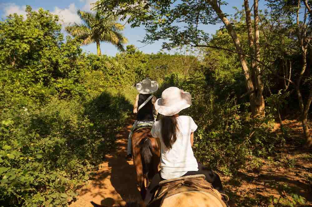 Riding horse Cuba